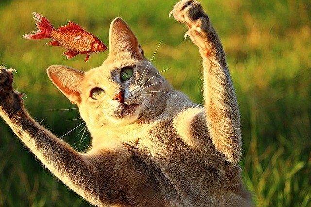 kočka s rybkou