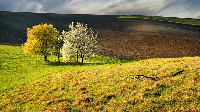 stromy u pole
